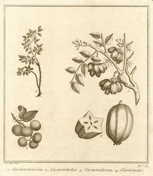 Associate Product Tropical fruit. Carambola Star Carandas plum Bengal currant karanda SCHLEY 1763