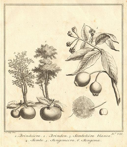 Associate Product Tropical fruit. Kokum Brinda Jambul Java plum Indian sour cherry. SCHLEY 1763