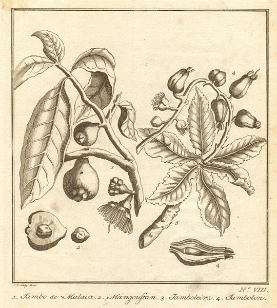 Associate Product Tropical fruit. Malay rose apple. Jambolan. Java/black plum jamun. SCHLEY 1763