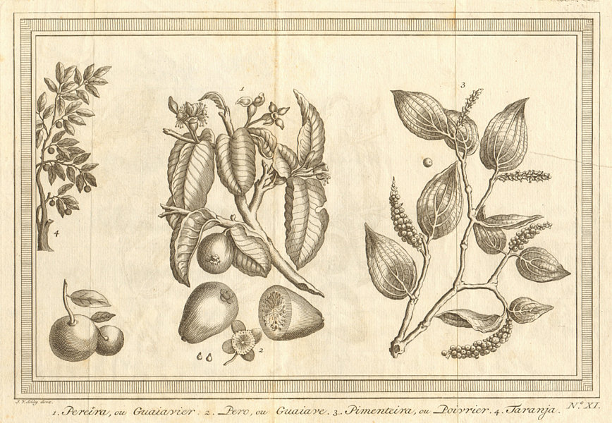 Associate Product Tropical fruit & spice trees & plants. Guava. Pepper. Orange. SCHLEY 1763