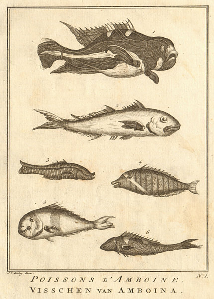 Associate Product I. Poissons d'Ambione. Indonesia Moluccas Maluku tropical fish. SCHLEY 1763