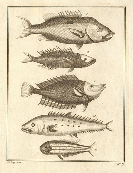 II. Poissons d'Ambione. Indonesia Moluccas Maluku tropical fish. SCHLEY 1763