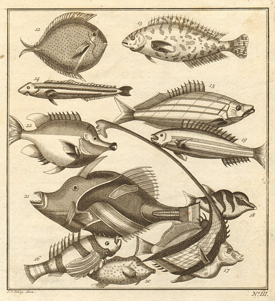 Associate Product III. Poissons d'Ambione. Indonesia Moluccas Maluku tropical fish. SCHLEY 1763