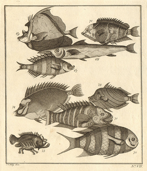 Associate Product VII. Poissons d'Ambione. Indonesia Moluccas Maluku tropical fish. SCHLEY 1763