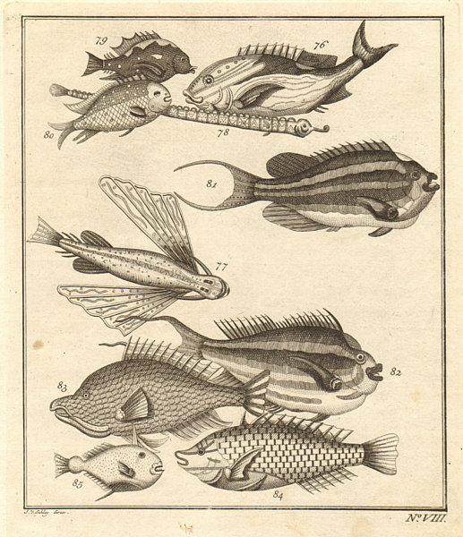 Associate Product VIII. Poissons d'Ambione. Indonesia Moluccas Maluku tropical fish. SCHLEY 1763