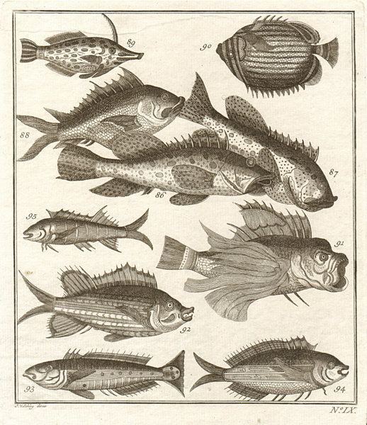 Associate Product IX. Poissons d'Ambione. Indonesia Moluccas Maluku tropical fish. SCHLEY 1763
