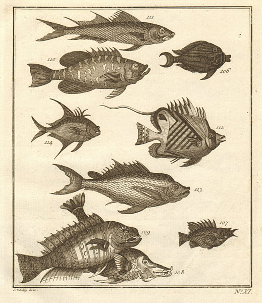 Associate Product XI. Poissons d'Ambione. Indonesia Moluccas Maluku tropical fish. SCHLEY 1763