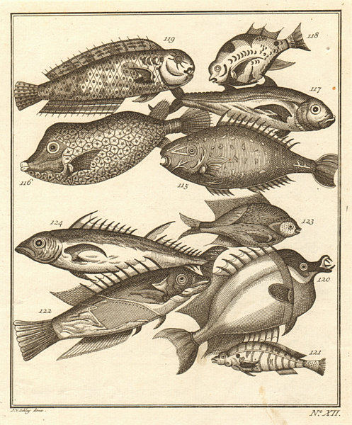 Associate Product XII. Poissons d'Ambione. Indonesia Moluccas Maluku tropical fish. SCHLEY 1763