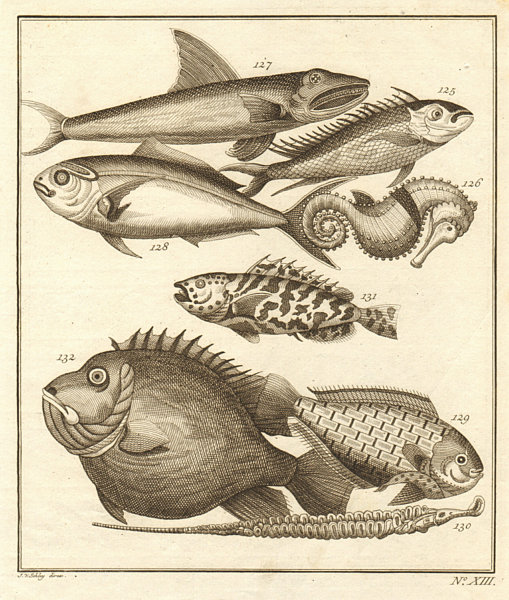 Associate Product XIII. Poissons d'Ambione. Indonesia Moluccas Maluku tropical fish. SCHLEY 1763