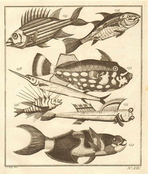 Associate Product XIV. Poissons d'Ambione. Indonesia Moluccas Maluku tropical fish. SCHLEY 1763