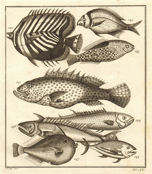 Associate Product XV. Poissons d'Ambione. Indonesia Moluccas Maluku tropical fish. SCHLEY 1763