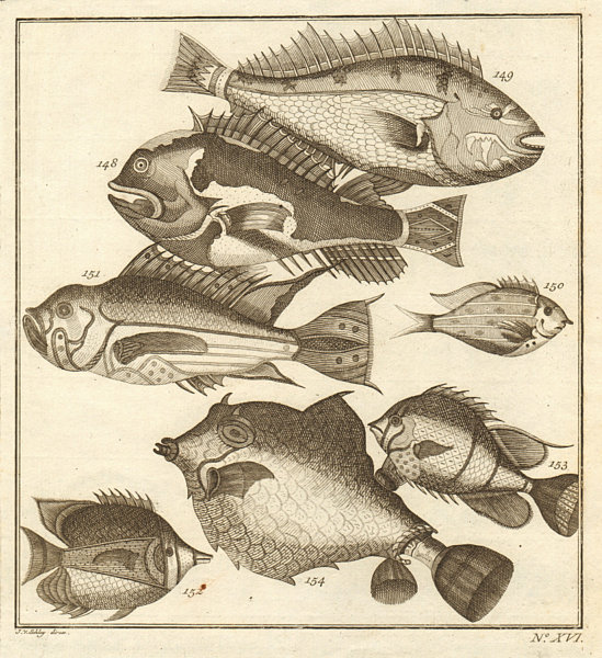 Associate Product XVI. Poissons d'Ambione. Indonesia Moluccas Maluku tropical fish. SCHLEY 1763