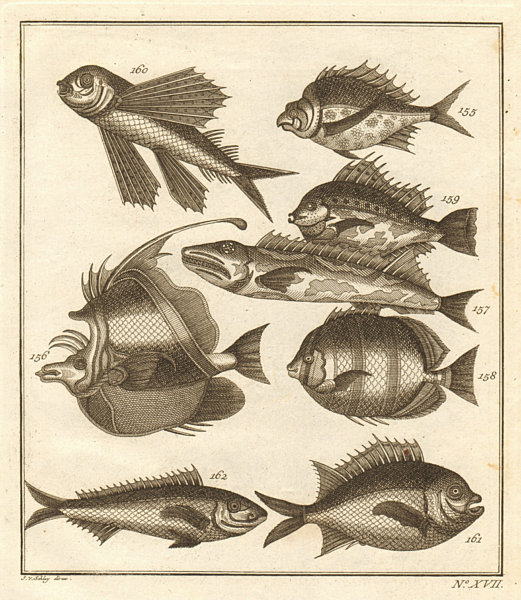 Associate Product XVII. Poissons d'Ambione. Indonesia Moluccas Maluku tropical fish. SCHLEY 1763