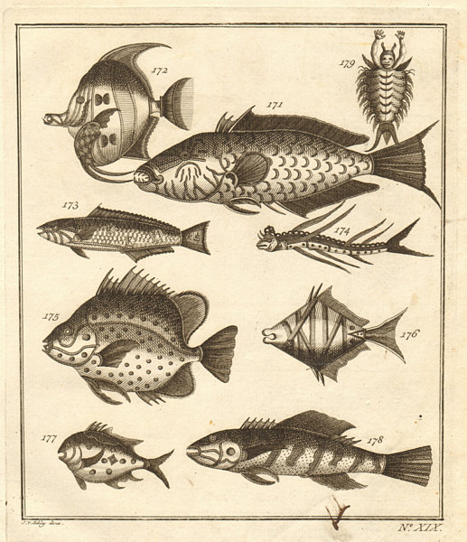 Associate Product XIX. Poissons d'Ambione. Indonesia Moluccas Maluku tropical fish. SCHLEY 1763