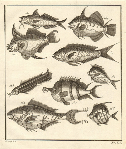 Associate Product XX. Poissons d'Ambione. Indonesia Moluccas Maluku tropical fish. SCHLEY 1763