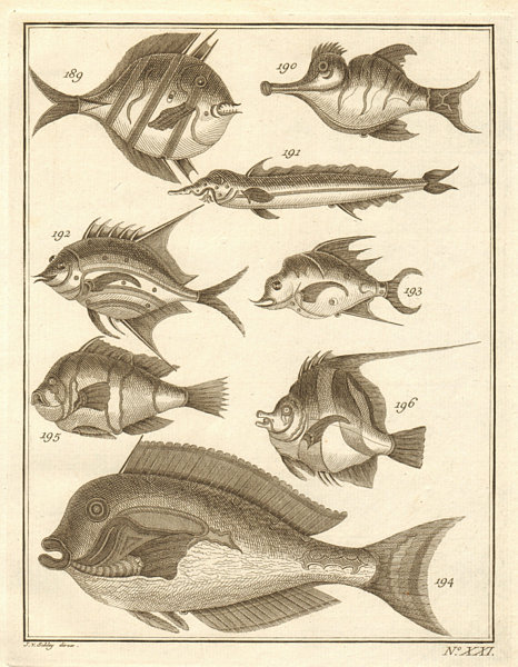 Associate Product XXI. Poissons d'Ambione. Indonesia Moluccas Maluku tropical fish. SCHLEY 1763