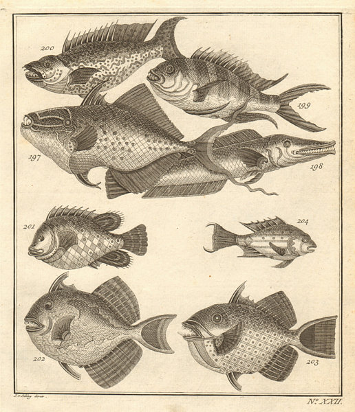Associate Product XXII. Poissons d'Ambione. Indonesia Moluccas Maluku tropical fish. SCHLEY 1763