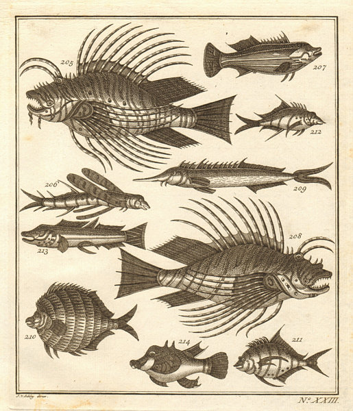 Associate Product XXIII. Poissons d'Ambione. Indonesia Moluccas Maluku tropical fish. SCHLEY 1763