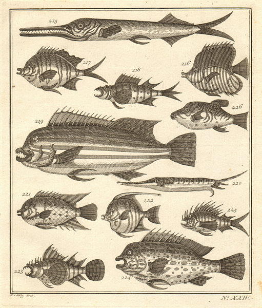 Associate Product XXIV. Poissons d'Ambione. Indonesia Moluccas Maluku tropical fish. SCHLEY 1763