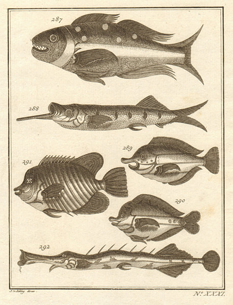 Associate Product XXXI. Poissons d'Ambione. Indonesia Moluccas Maluku tropical fish. SCHLEY 1763