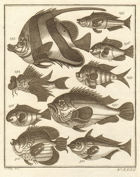 Associate Product XXXII. Poissons d'Ambione. Indonesia Moluccas Maluku tropical fish. SCHLEY 1763