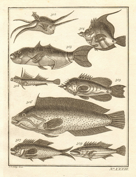 Associate Product XXXIII. Poissons d'Ambione. Indonesia Moluccas Maluku tropical fish. SCHLEY 1763