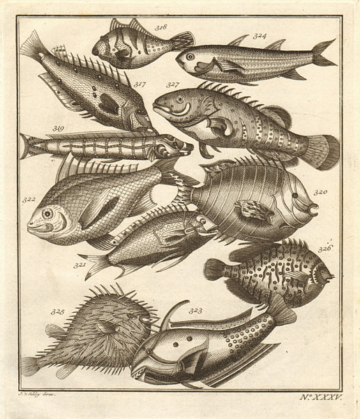 Associate Product XXXV. Poissons d'Ambione. Indonesia Moluccas Maluku tropical fish. SCHLEY 1763