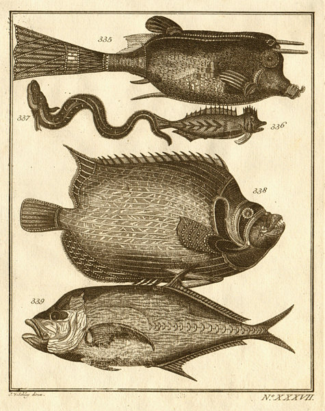 XXXVII. Poissons d'Ambione. Indonesia Moluccas Maluku tropical fish. SCHLEY 1763