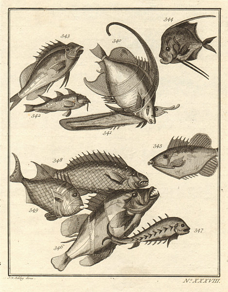 Associate Product XXXVIII Poissons d'Ambione. Indonesia Moluccas Maluku tropical fish. SCHLEY 1763