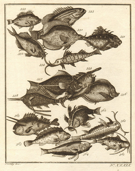 Associate Product XXXIX. Poissons d'Ambione. Indonesia Moluccas Maluku tropical fish. SCHLEY 1763