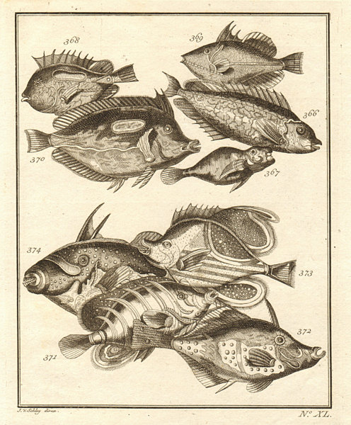 Associate Product XL. Poissons d'Ambione. Indonesia Moluccas Maluku tropical fish. SCHLEY 1763
