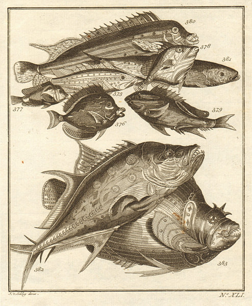 Associate Product XLI. Poissons d'Ambione. Indonesia Moluccas Maluku tropical fish. SCHLEY 1763
