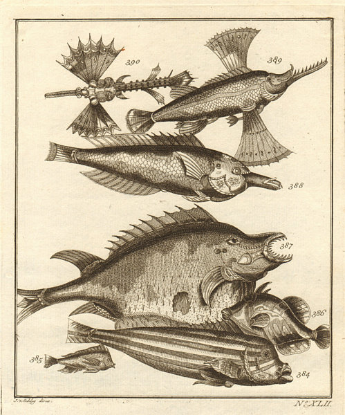 Associate Product XLII. Poissons d'Ambione. Indonesia Moluccas Maluku tropical fish. SCHLEY 1763