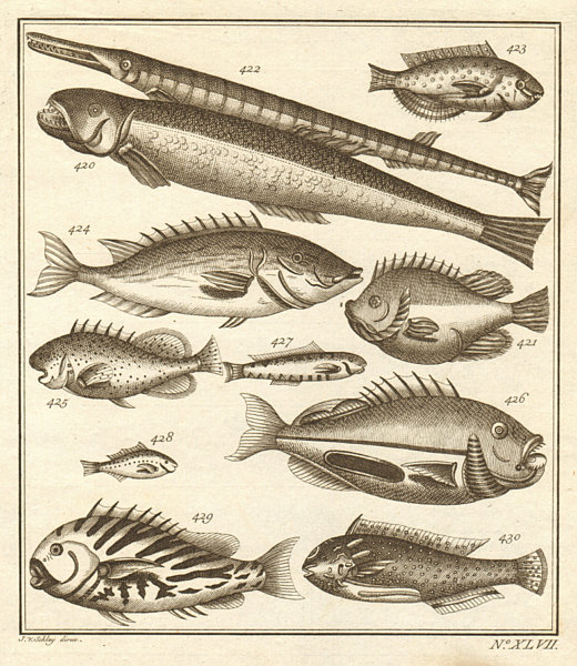 Associate Product XLVII. Poissons d'Ambione. Indonesia Moluccas Maluku tropical fish. SCHLEY 1763