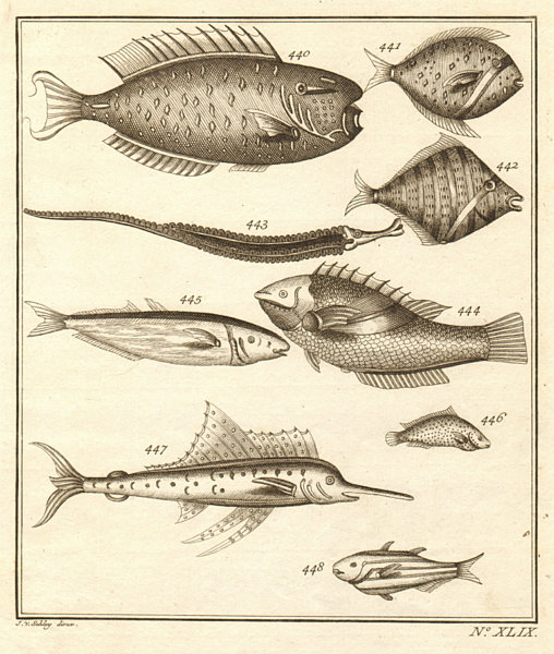 XLIX. Poissons d'Ambione. Indonesia Moluccas Maluku tropical fish. SCHLEY 1763