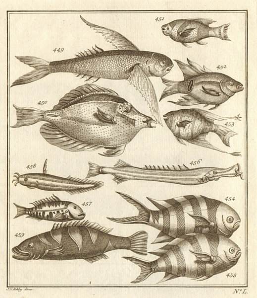 Associate Product L. Poissons d'Ambione. Indonesia Moluccas Maluku tropical fish. SCHLEY 1763