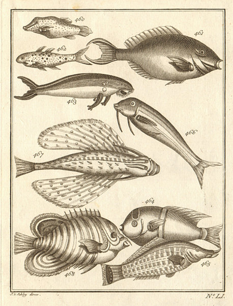Associate Product LI. Poissons d'Ambione. Indonesia Moluccas Maluku tropical fish. SCHLEY 1763