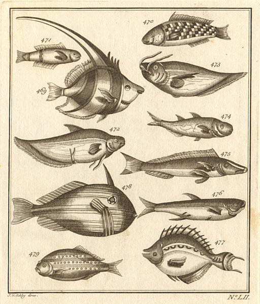 Associate Product LII. Poissons d'Ambione. Indonesia Moluccas Maluku tropical fish. SCHLEY 1763