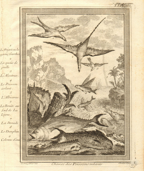 Associate Product Frigate Tropicbird Flying fish Albacore Bonito Dorado Tuna Waterspout 1746