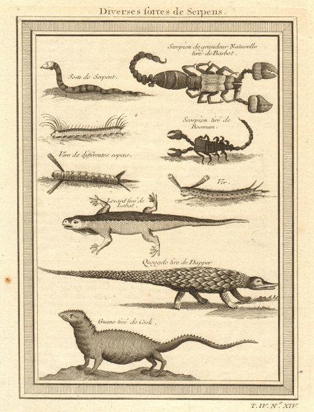 Associate Product West African serpents. Snake scorpion worm lizard pangolin iguana 1747 print