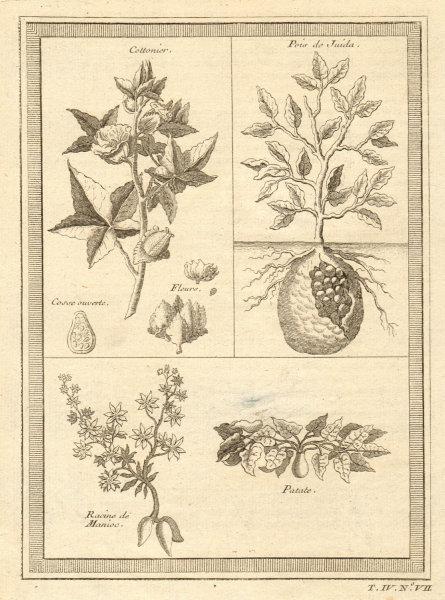 Associate Product 'Cottonier & plantes de Guinée'. Cotton Cassava manioc potato. West Africa 1747