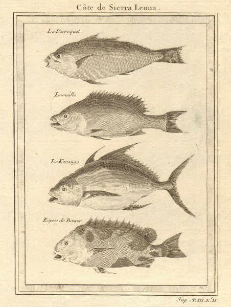 """Associate Product Sierra Leone fish. Parrot fish """"Old wife"""" Trevally Filefish 1747 print"""