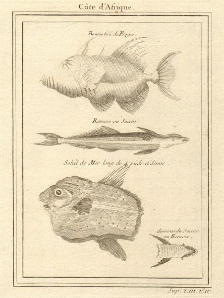 Associate Product West African Fish. Filefish. Remora or suckerfish. Ocean Sunfish 1747 print
