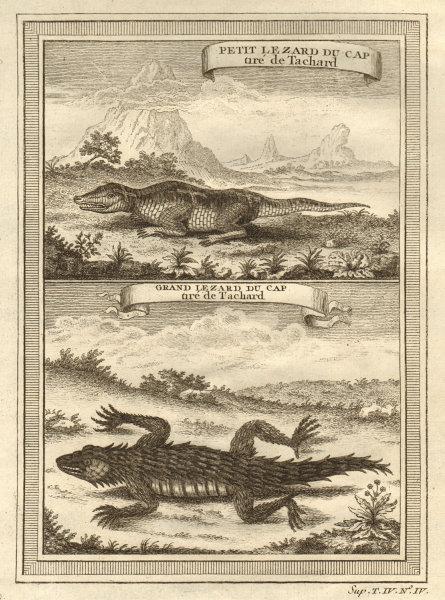 South Africa. Small Cape Lizard & Great Cape Lizard, from Tachard 1748 print