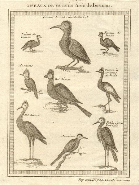 Associate Product Oiseaux de Guinée. West African birds. Sestro Ouidah Guinea pheasants 1748