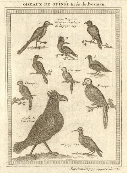 Associate Product 'Oiseaux de Guinée'. West African birds. Parrots. Cape Coast eagle 1748 print