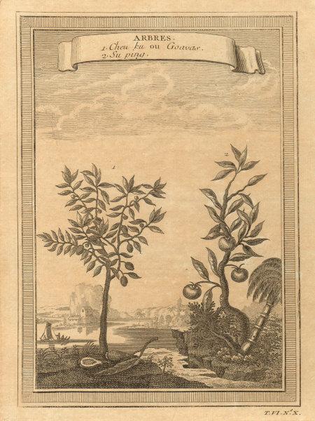Associate Product 'Arbres; Cheu ku ou Goavas; Suping'. Chinese trees. Guava. China 1748 print