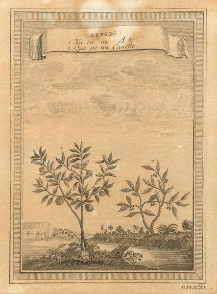China trees. Que pe or Cinammon. Ya ta or Ata, Sugar/custard apple sweetsop 1748