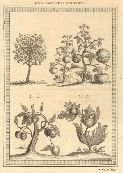 Associate Product Cotton trees. Lychee. Ata, Sugar/custard apple or sweetsop. China 1748 print