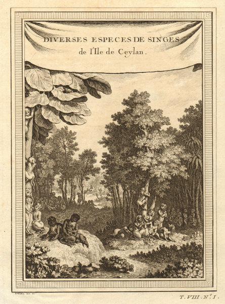 Associate Product 'Singes de l''Ile de Ceylan'. Sri Lankan monkey species. Toque macaque 1750